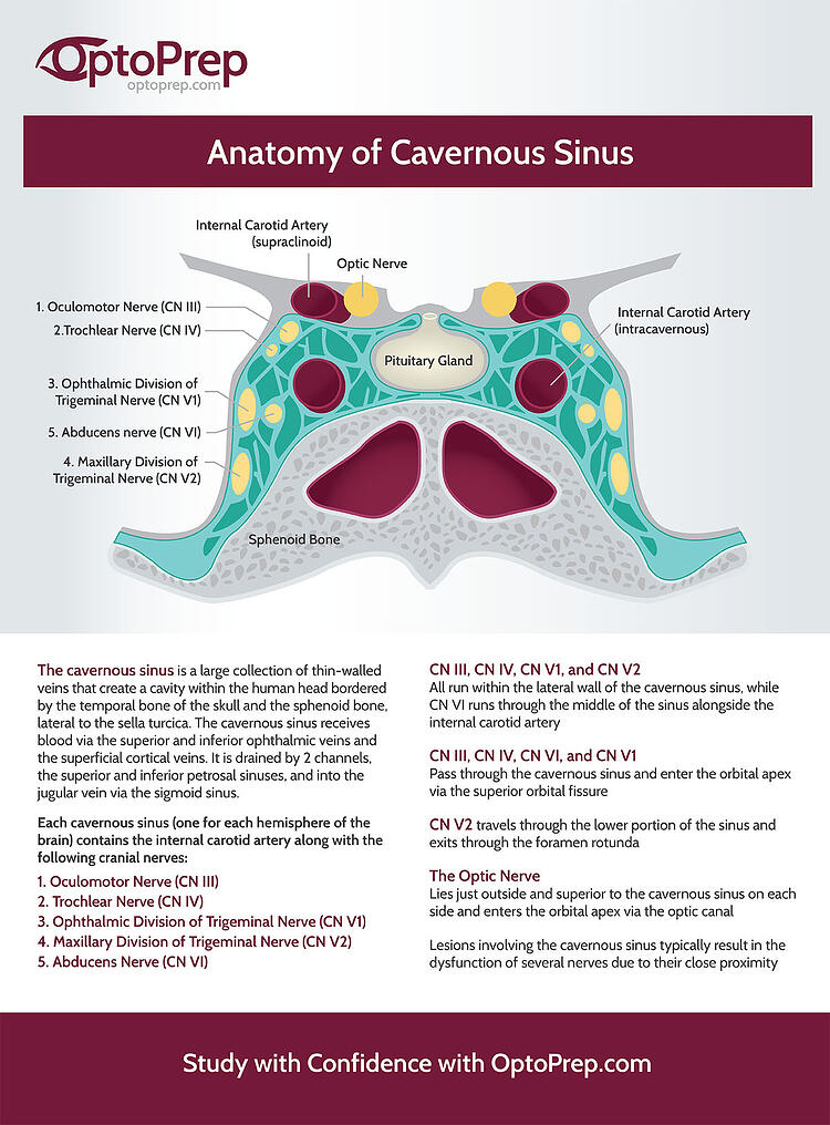 Infographic: Anatomy of Cavernous Sinus
